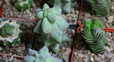 21-24 марта в Доме Природы состоится выставка кактусов и других экзотических растений