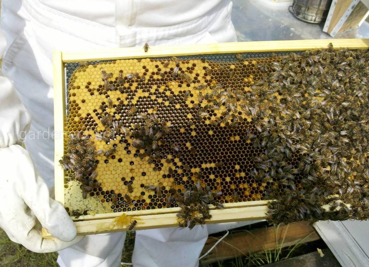 пчеловоды