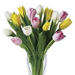 Coffeein flowers