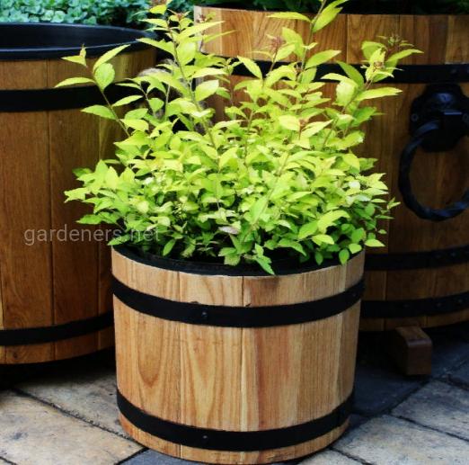 Деревянные кадки (кашло, горшки, емкости) для цветов, декоративных растений