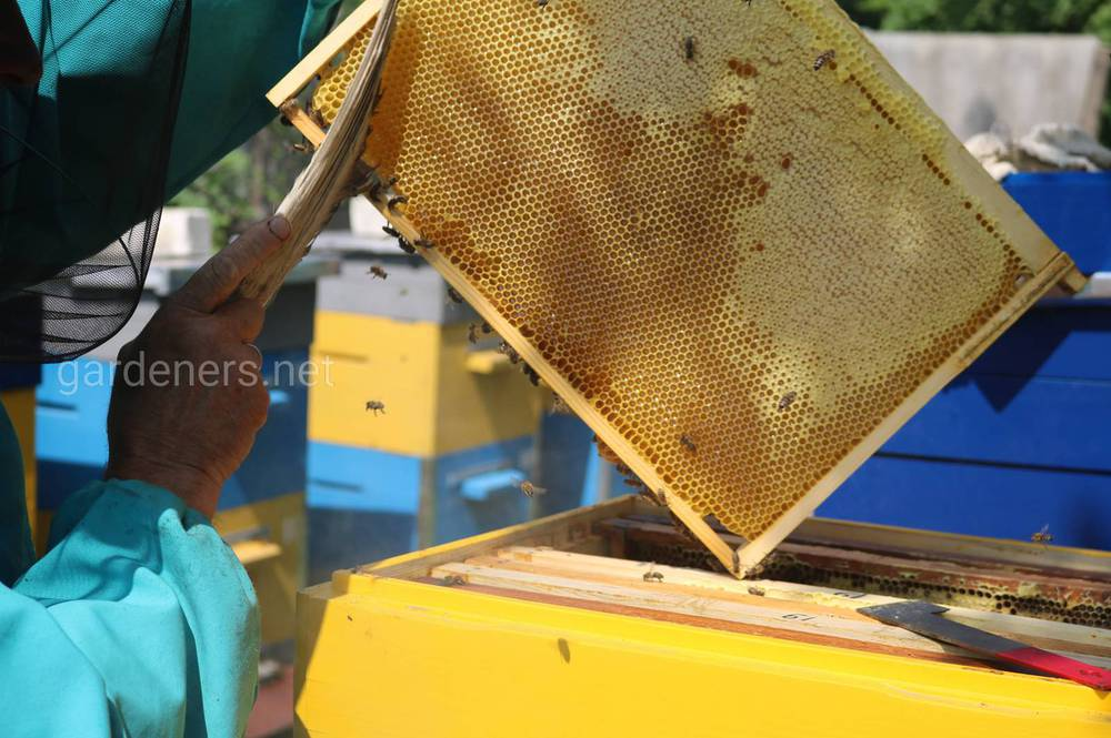 Як працюють бджоли