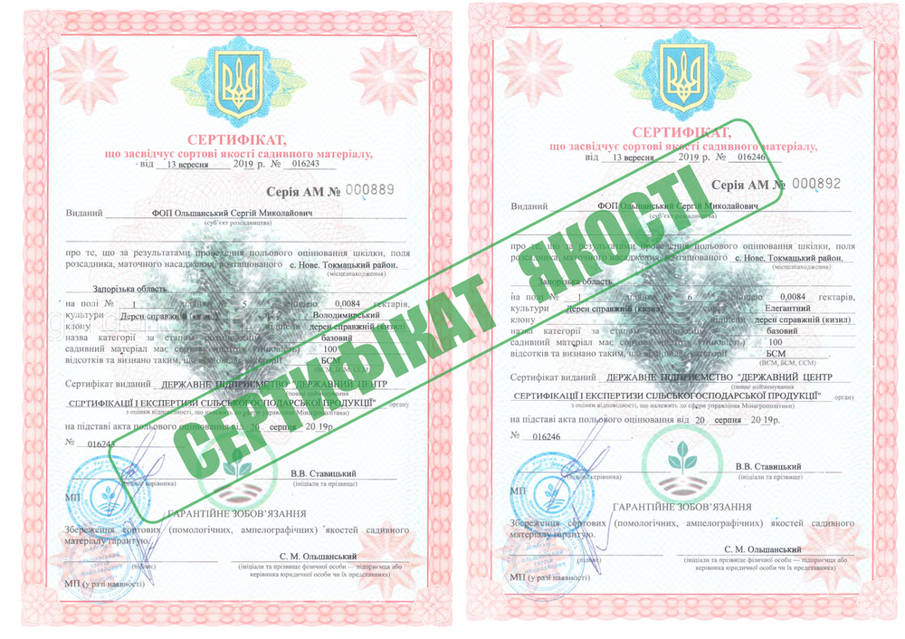 сертификат на саженцы кизила