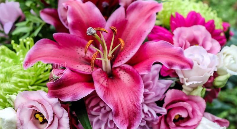 5 важных причин, почему люди любят цветы