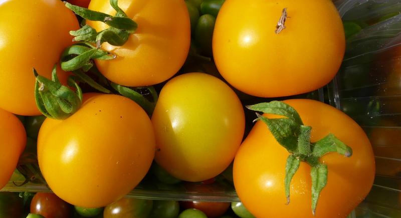 Цветные томаты. Сорта низкорослых ранних томатов