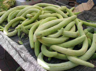 Trichosanthes_cucumerina_-_Persian_Cukes_at_HOTCFM.jpg
