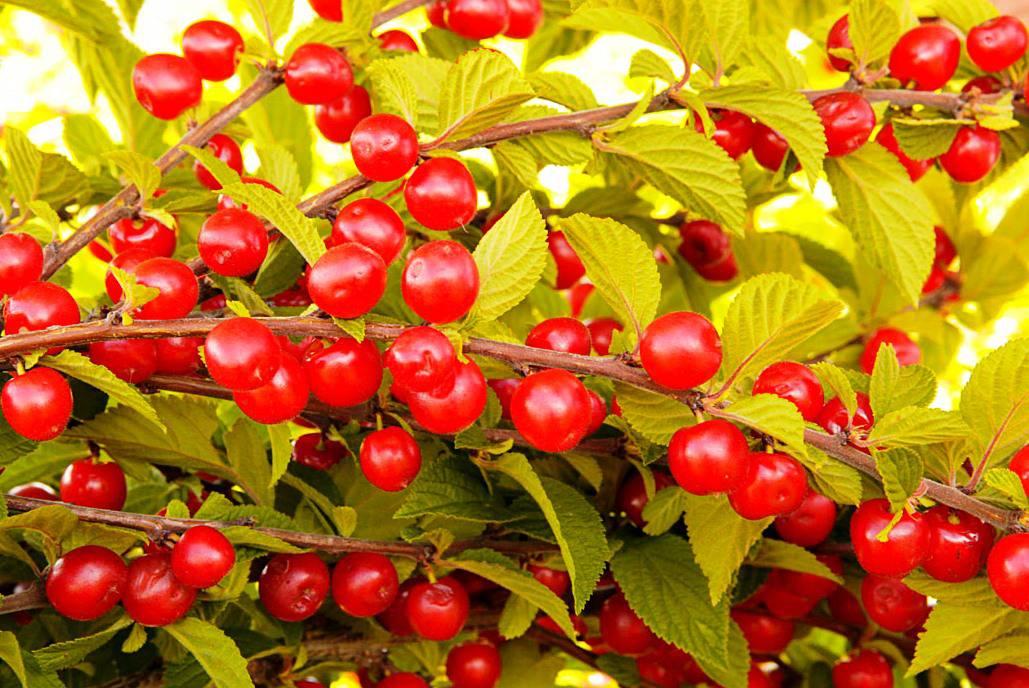 Осенняя Вировская