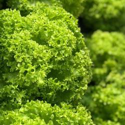Eco Green Salad