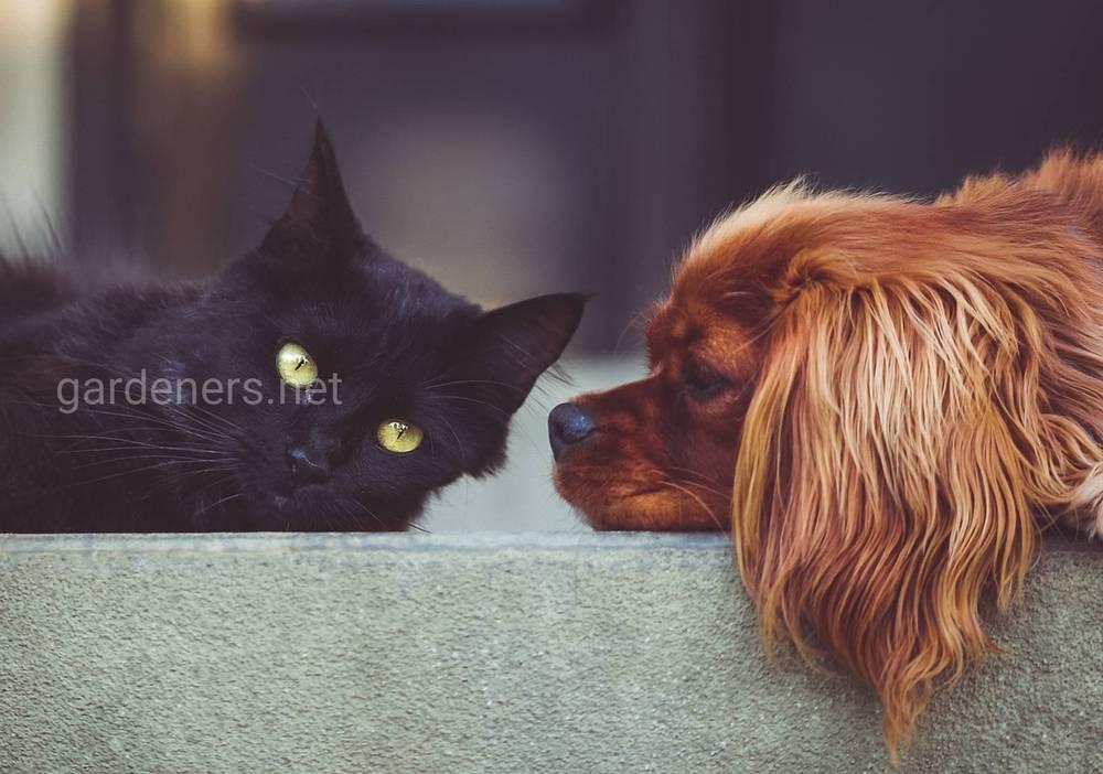 как лечить домашних животных
