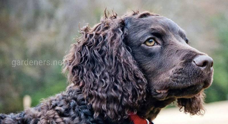 Кращі породи собак для полювання
