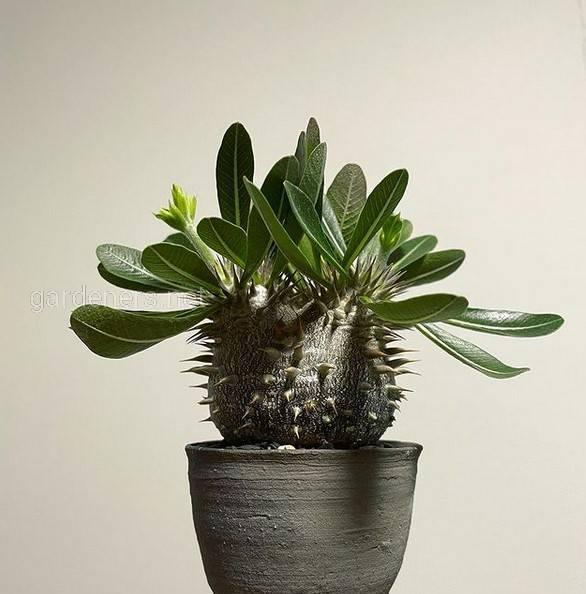 Какие комнатные растения подойдут для небольших помещений?