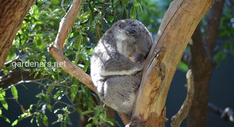 Австралийский зоопарк: чем занятся и на кого посмотреть