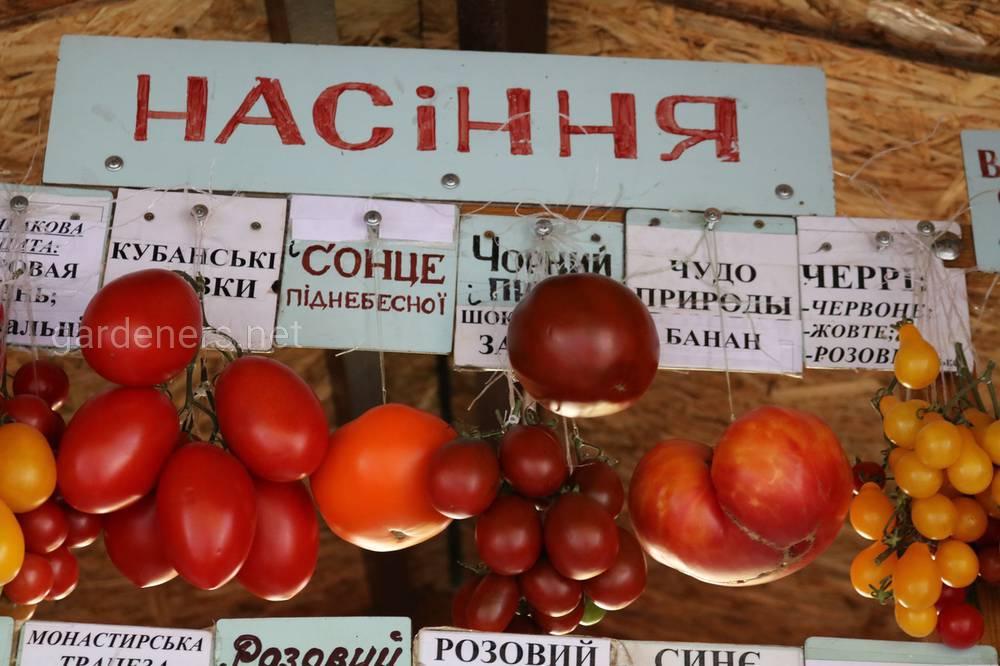 насіння томатов