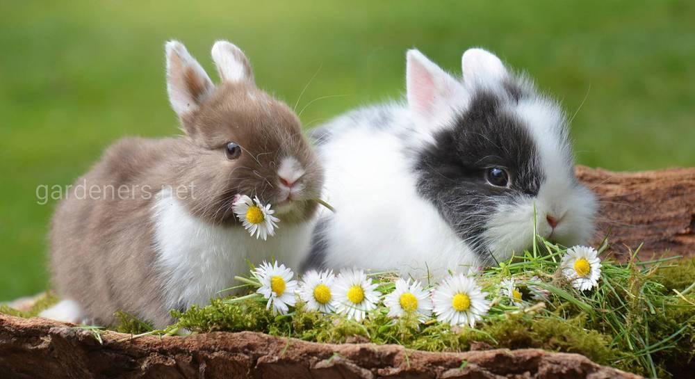 Условия содержания комнатного кролика.jpg
