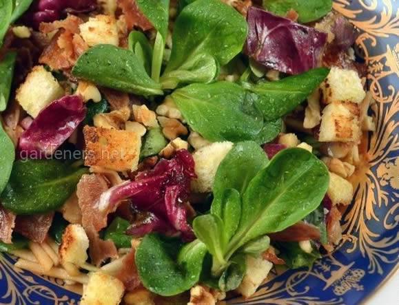 Итальянский салат с радичио и яблоками