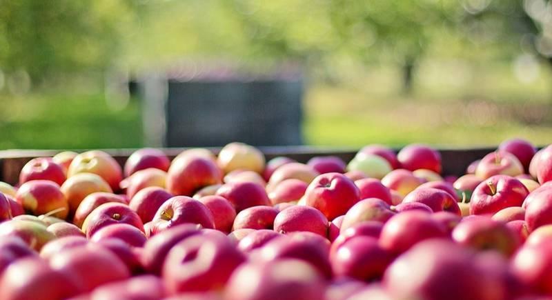 store_apples.jpg