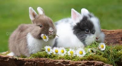 Основные правила содержания домашнего кролика: что должно быть в клетке?