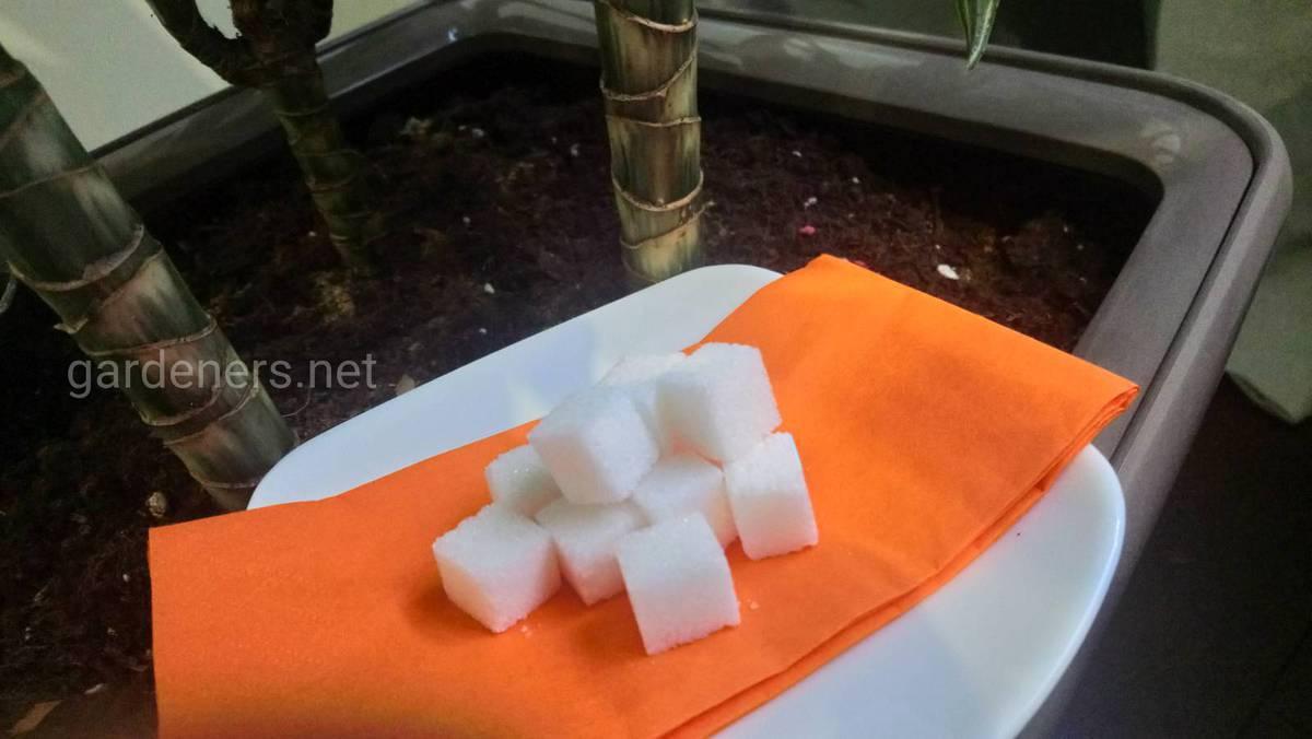 сахар для растений