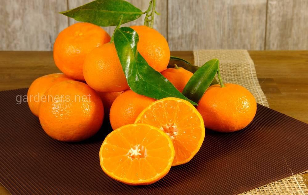 плоды клементина