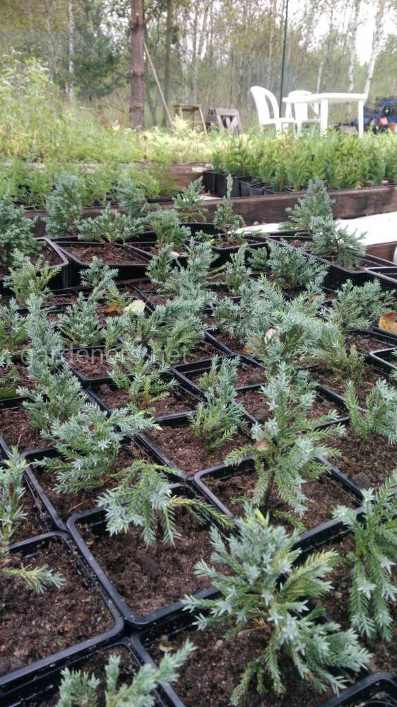 Питомник саженцев растений