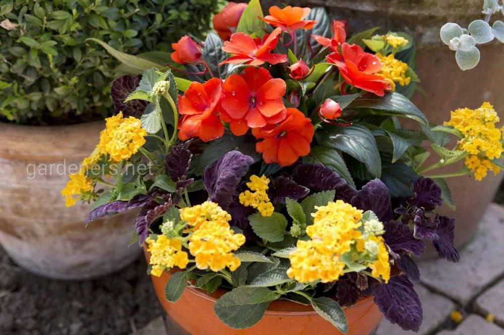Высадка цветов в контейнерный сад