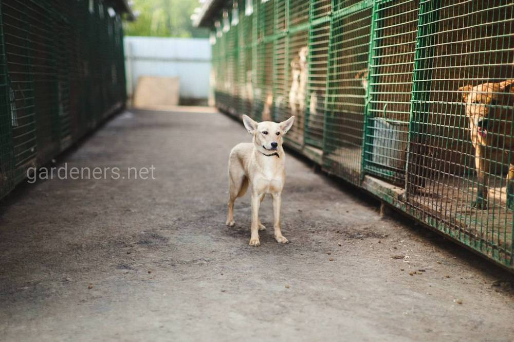 Пес из приюта