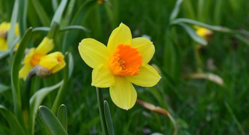 flower-3111522_1920.jpg