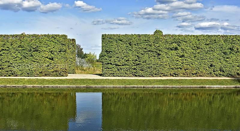 Граб — листяний багатосезонний паркан