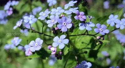 Растения для теневых участков