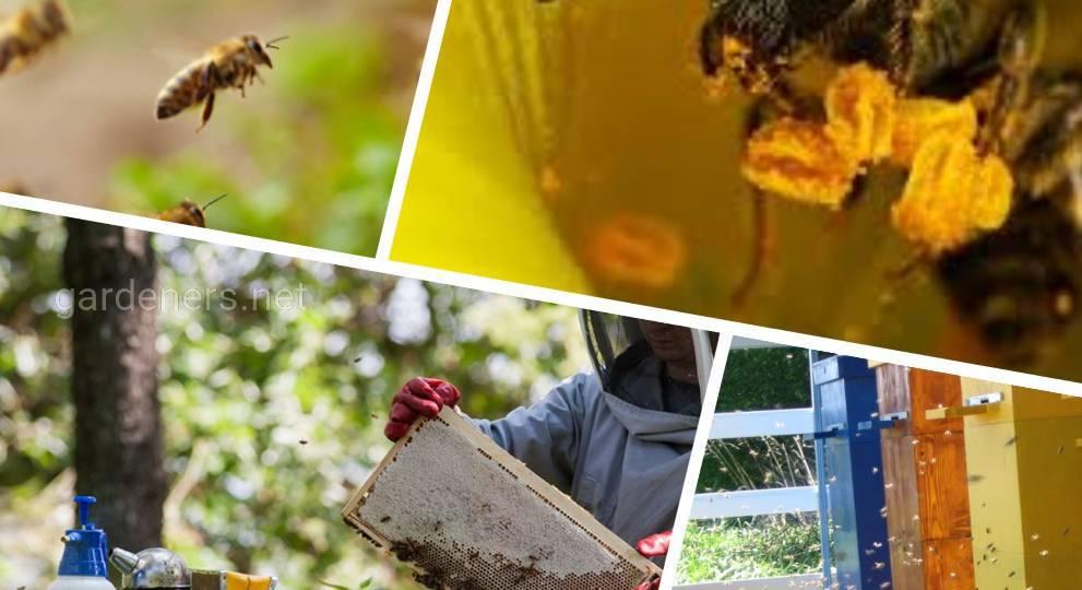 страхування бджолосімей.jpg