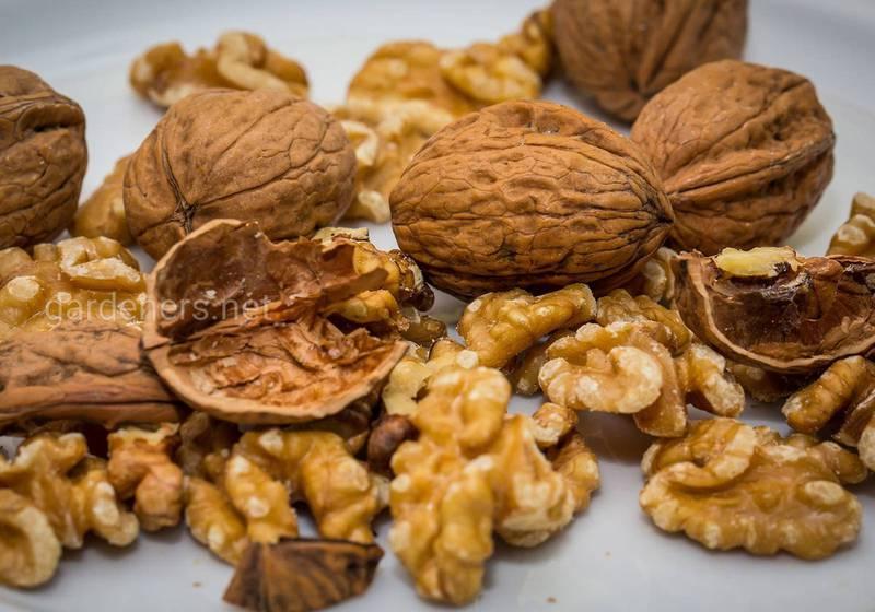 Как повысить иммунитет с помощью грецких орехов?