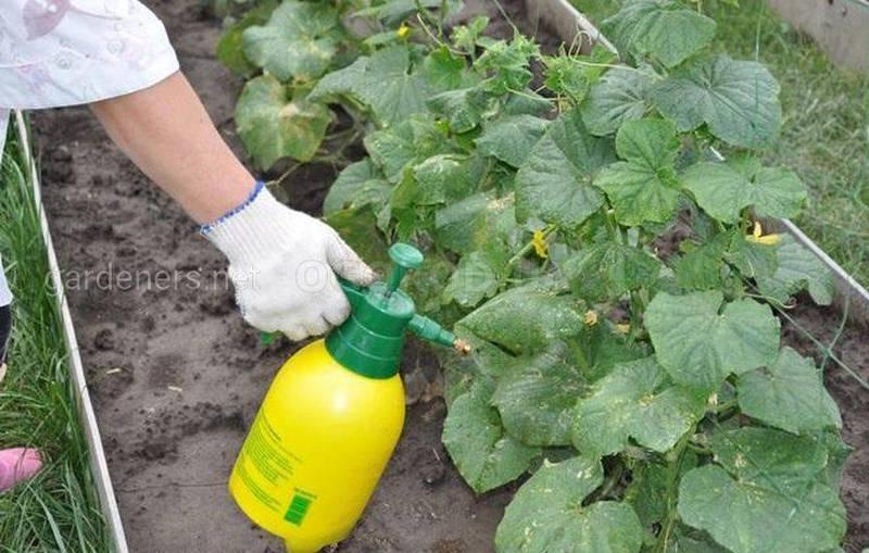 Коли та як проводити позакореневе підживлення рослин?