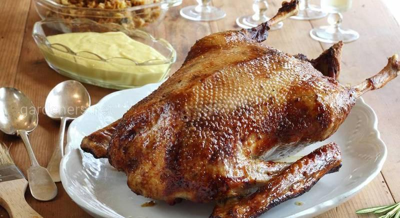 Интересные рецепты блюд из утки
