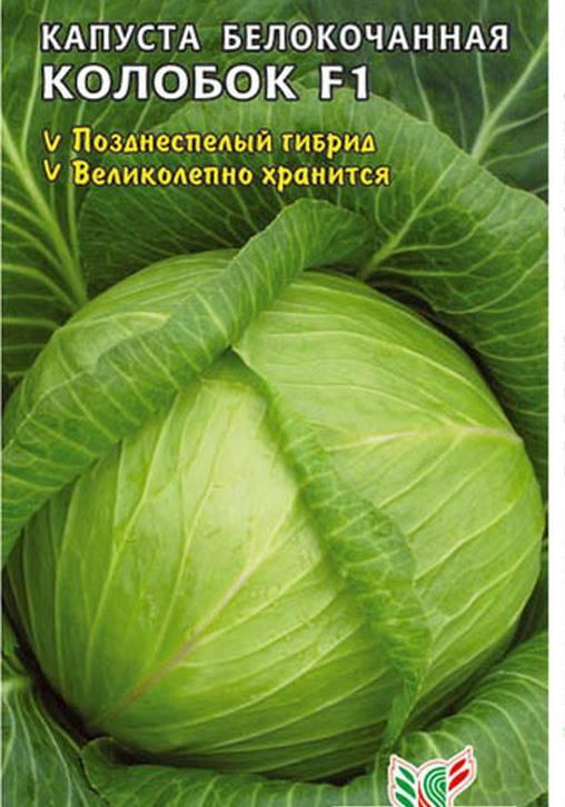 Сорт капусты Колобок