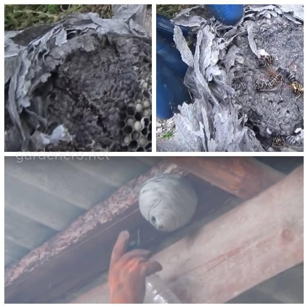 Опрыскивание гнезда керосином
