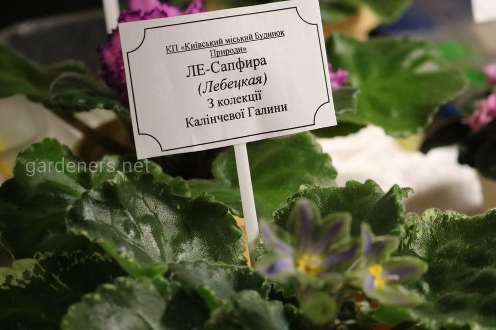 коллекция Галины Калинчевой