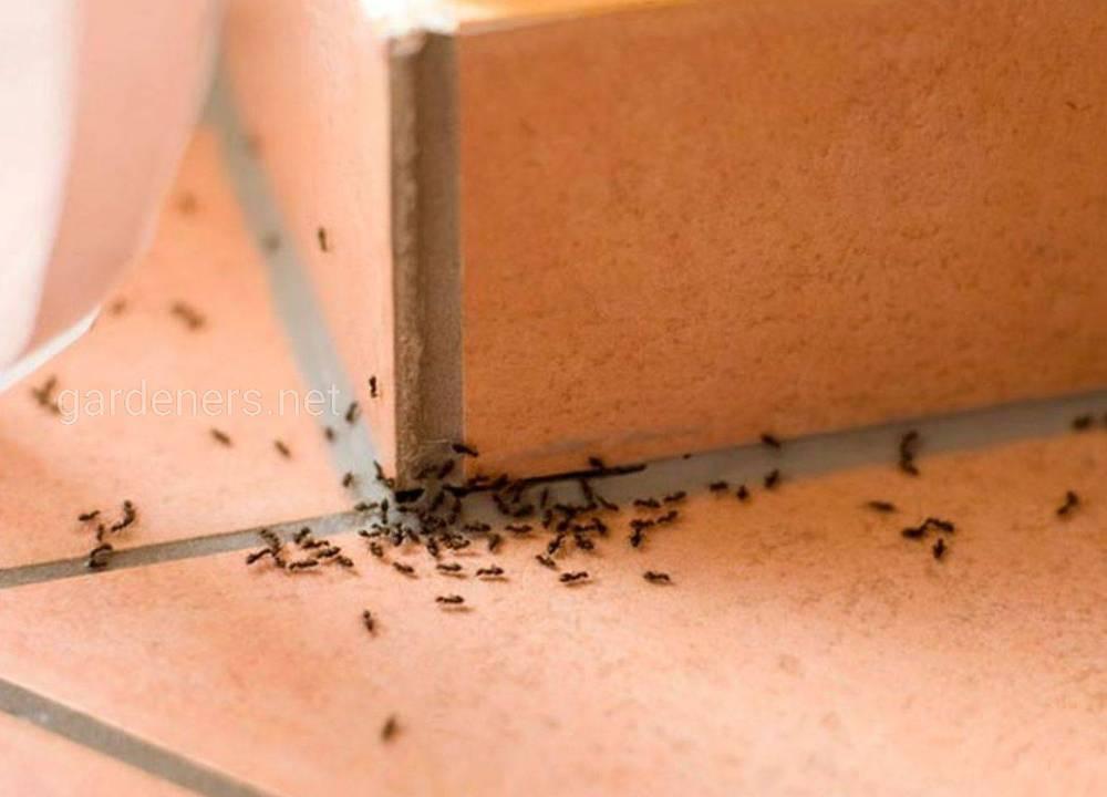Химия против муравьев