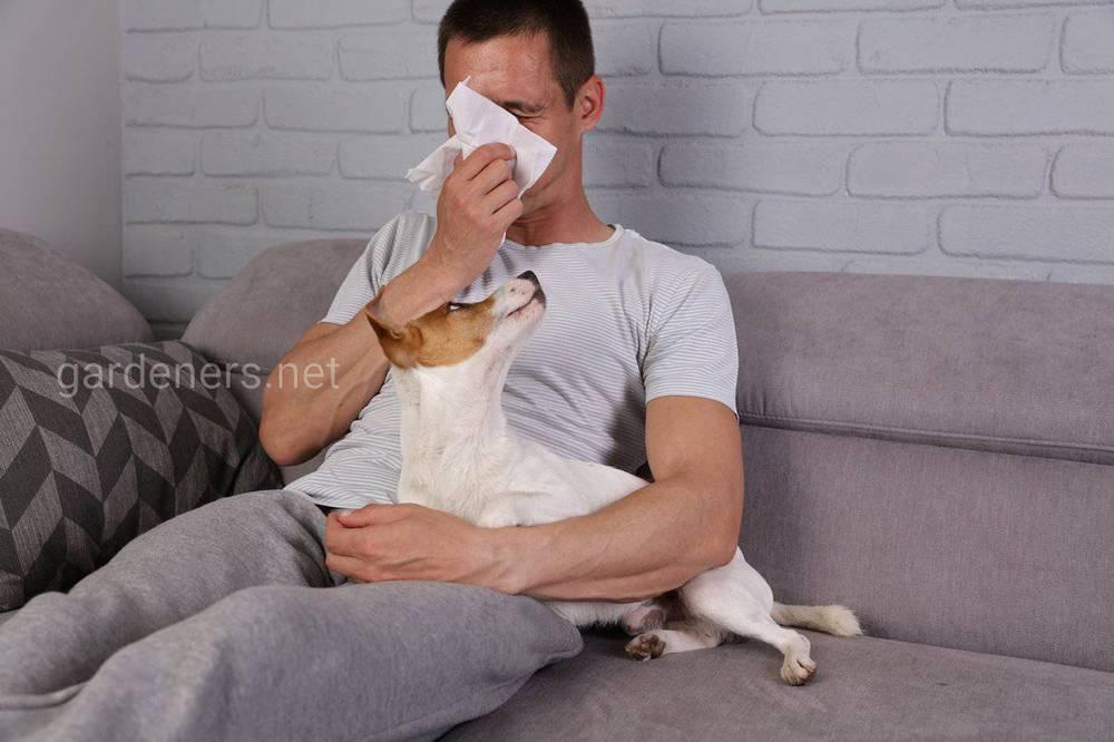 Аллергия на питомца