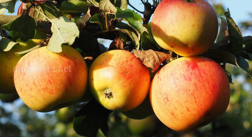 Итоги исследования яблочного сока
