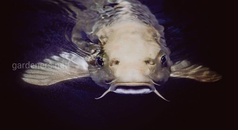 Тонкощі ведення рибного бізнесу