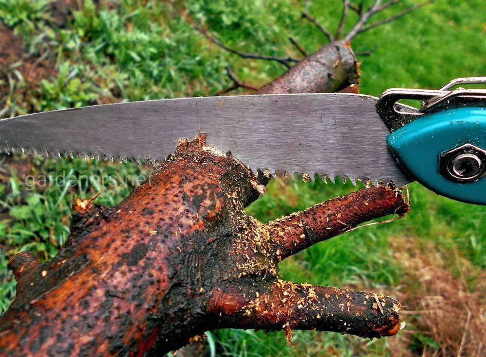 Технология процедуры спила деревьев