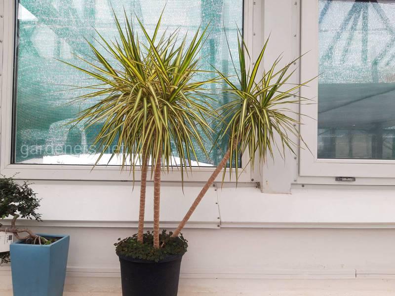 Полив комнатных растений в зимний период