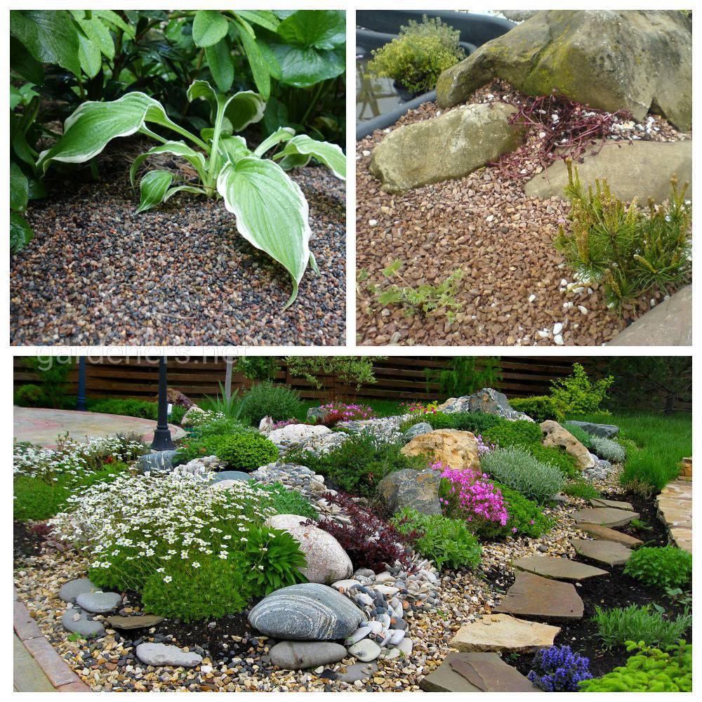 Как создать гравийный сад