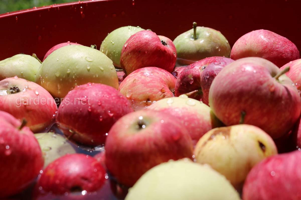 Яблочное варенье на зиму
