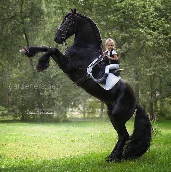 Чем же полезен конный спорт для детей?