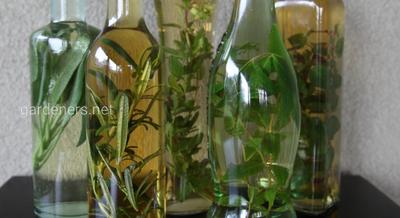 Вино на основе трав