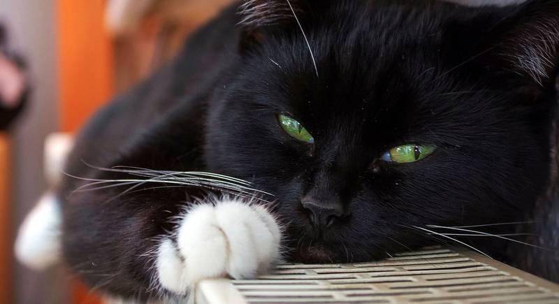 cat-1730517_1920.jpg
