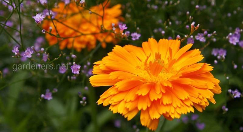 Как преобразить цветочную клумбу