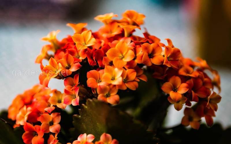 Незвичайні види сукулентів, які прикрасять ваш будинок і сад!