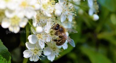виды пчел.jpg