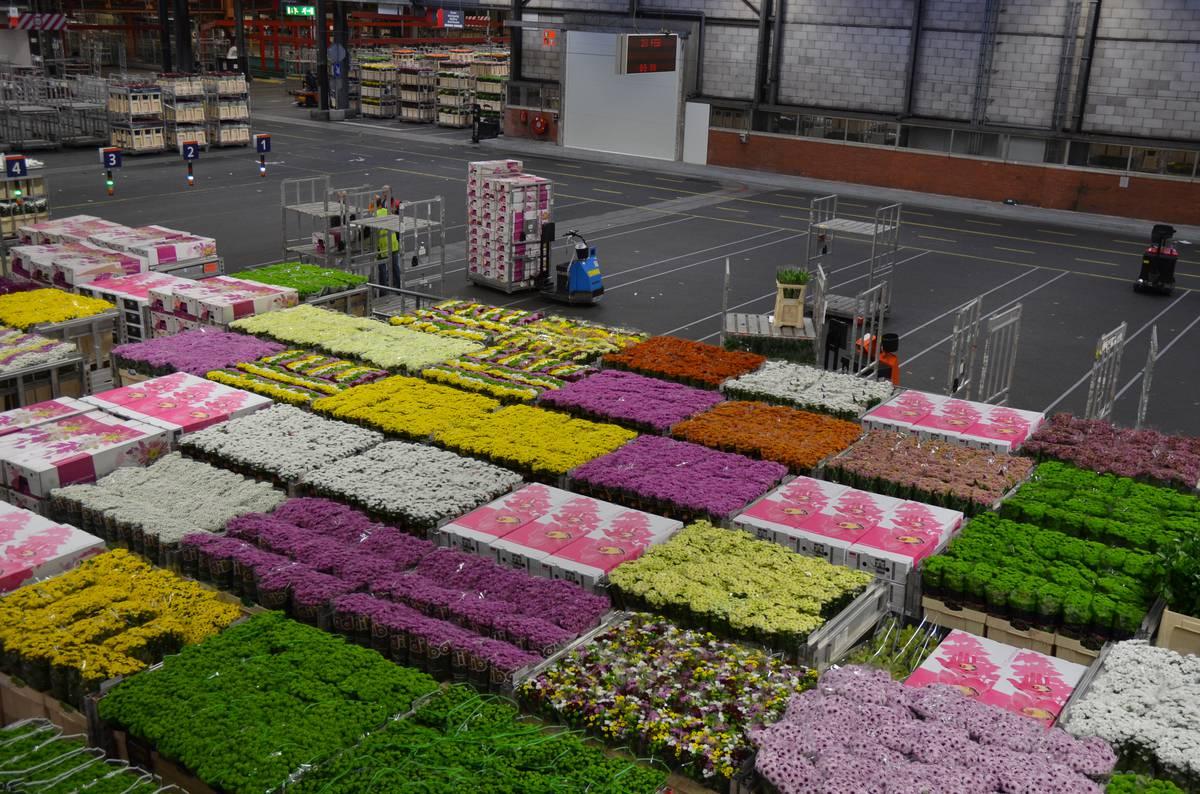 Букет, калиновка-цветы оптом